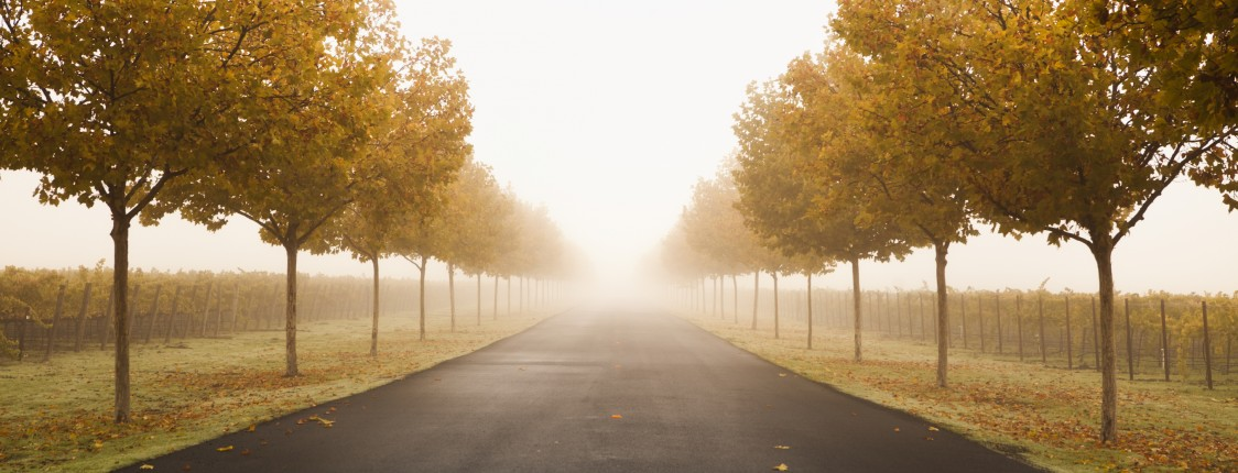 Driveway to a wine vineyard in the foggy morning in Napa USA